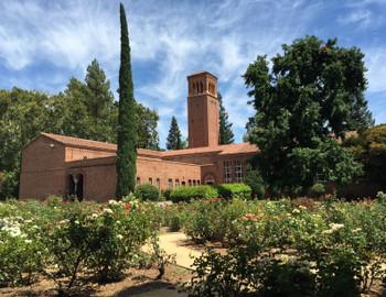 Chico State Rose Garden